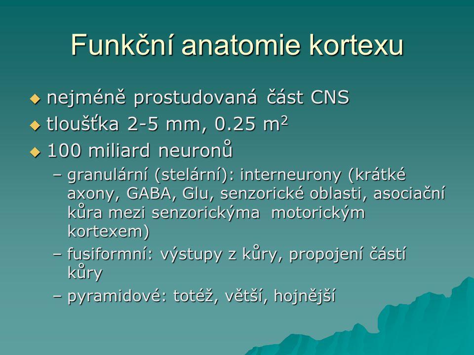 Funkční anatomie kortexu  nejméně prostudovaná část CNS  tloušťka 2-5 mm, 0.25 m 2  100 miliard neuronů –granulární (stelární): interneurony (krátk
