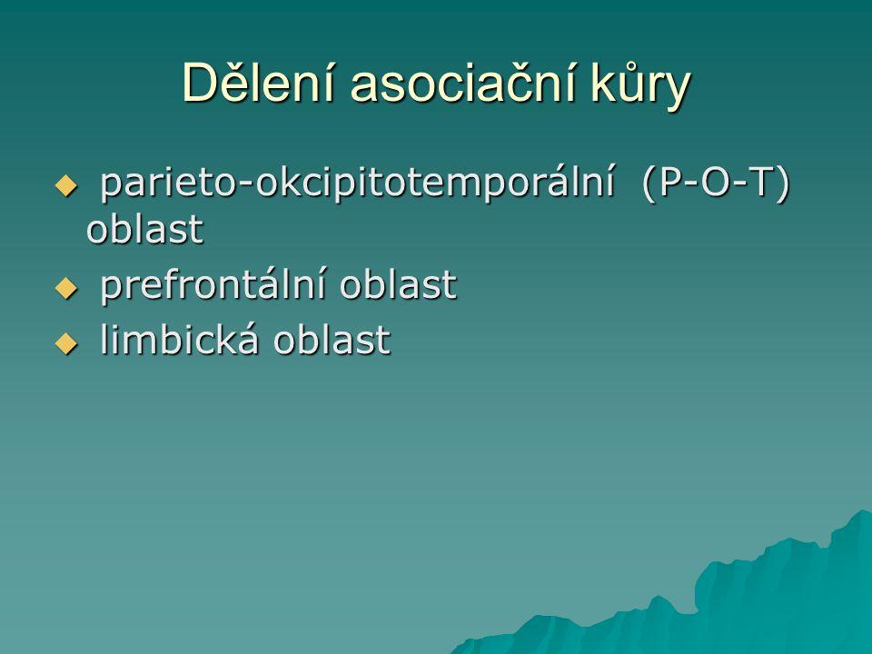 P-O-T asociační oblast  ohraničení (tedy i zásadní funkční spoje): somatosenzorická kůra vepředu, zraková vzadu a sluchová laterálně  4 funkční oblasti
