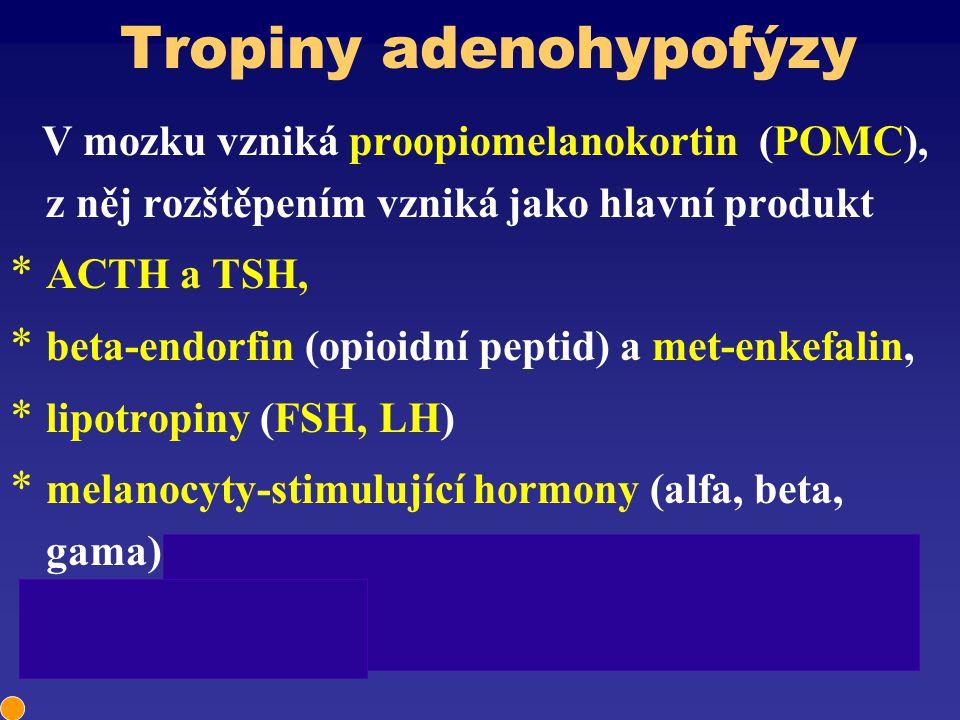 Tropiny adenohypofýzy V mozku vzniká proopiomelanokortin (POMC), z něj rozštěpením vzniká jako hlavní produkt * ACTH a TSH, * beta-endorfin (opioidní