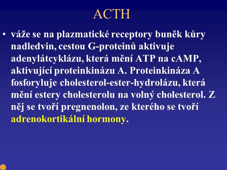 ACTH váže se na plazmatické receptory buněk kůry nadledvin, cestou G-proteinů aktivuje adenylátcyklázu, která mění ATP na cAMP, aktivující proteinkiná