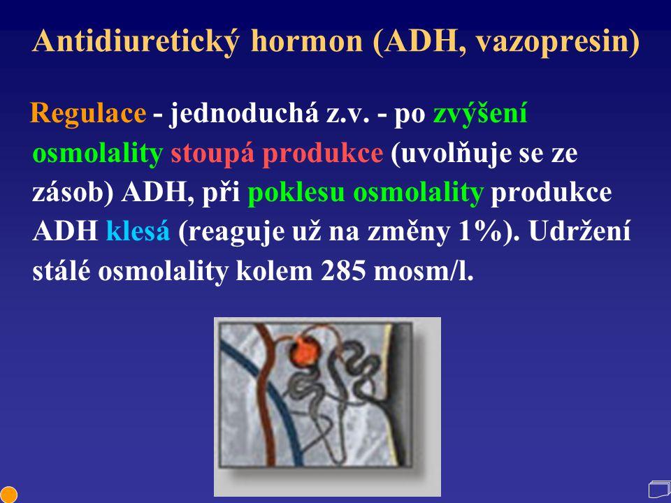 Antidiuretický hormon (ADH, vazopresin) Regulace - jednoduchá z.v. - po zvýšení osmolality stoupá produkce (uvolňuje se ze zásob) ADH, při poklesu osm
