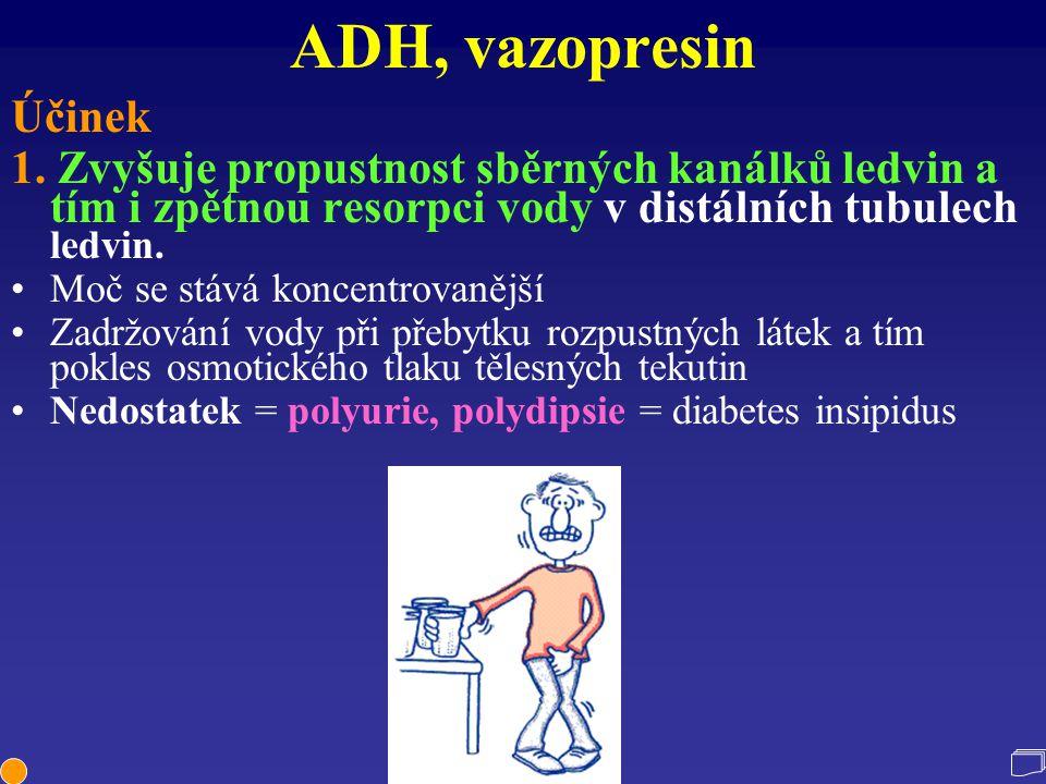ADH, vazopresin Účinek 1. Zvyšuje propustnost sběrných kanálků ledvin a tím i zpětnou resorpci vody v distálních tubulech ledvin. Moč se stává koncent