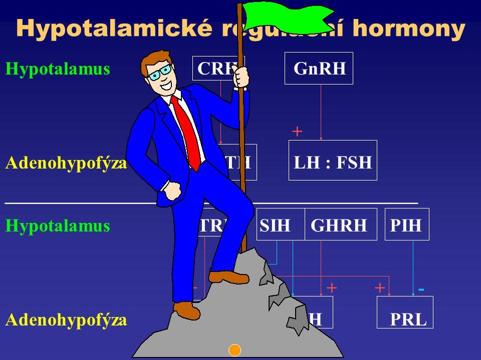 Hypotalamické regulační hormony HypotalamusCRHGnRH + AdenohypofýzaACTHLH : FSH ____________________________________________ HypotalamusTRH SIH GHRHPIH