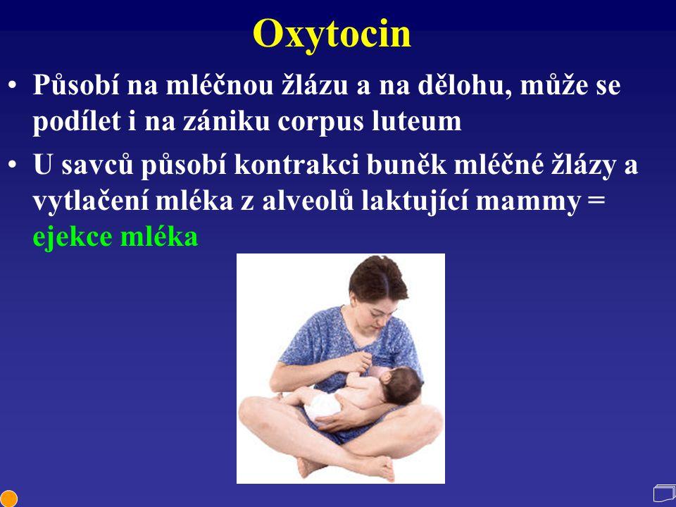 Oxytocin Působí na mléčnou žlázu a na dělohu, může se podílet i na zániku corpus luteum U savců působí kontrakci buněk mléčné žlázy a vytlačení mléka