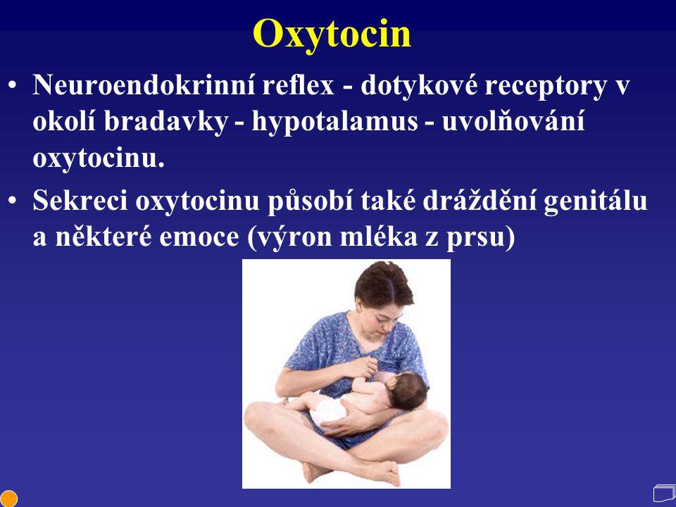 Oxytocin Neuroendokrinní reflex - dotykové receptory v okolí bradavky - hypotalamus - uvolňování oxytocinu. Sekreci oxytocinu působí také dráždění gen