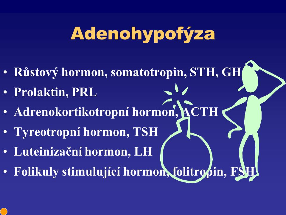 Adenohypofýza Růstový hormon, somatotropin, STH, GH Prolaktin, PRL Adrenokortikotropní hormon, ACTH Tyreotropní hormon, TSH Luteinizační hormon, LH Fo