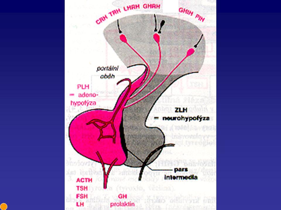 Somatotropin Regulace Stimulace - hypotalamus, stres, hypoglykémie, příjem potravy, dopamin, beta adrenergní agonisté Inhibice - hypotalamus, glukóza, dopaminergní antagonisté Účinek Stimulace růstu (anabolismus - podporuje proteosyntézu), ale i katabolismus (lipomobilizace) Ve vysoké koncentraci vyvolává hyperglykémii Celkově pozitivní bilance dusíku a fosforu, pokles aminokyselin a močoviny v krvi a zadržování Na a K