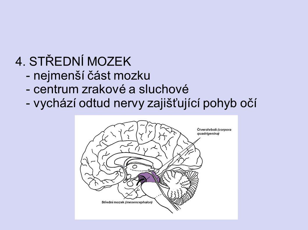 4. STŘEDNÍ MOZEK - nejmenší část mozku - centrum zrakové a sluchové - vychází odtud nervy zajišťující pohyb očí