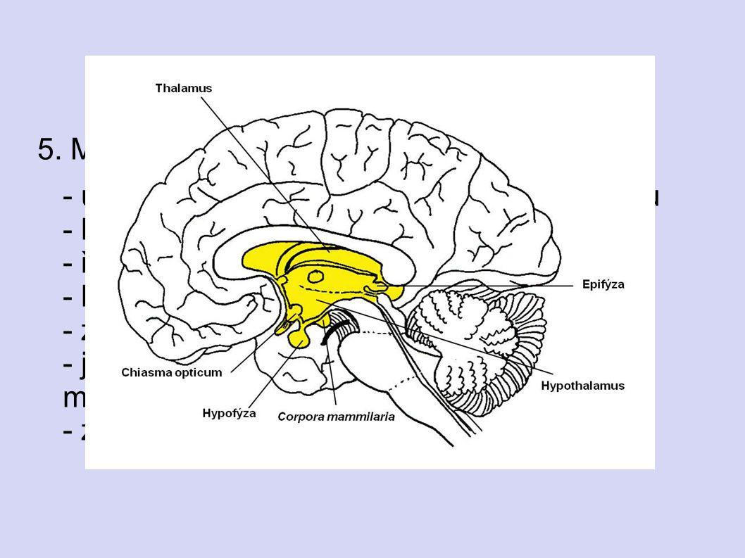 5. MEZIMOZEK - uložen mezi polokoulemi koncového mozku - koordinuje funkce útrobních orgánů - řídí tělesnou teplotu - hospodaří s vodou - zajišťuje sp