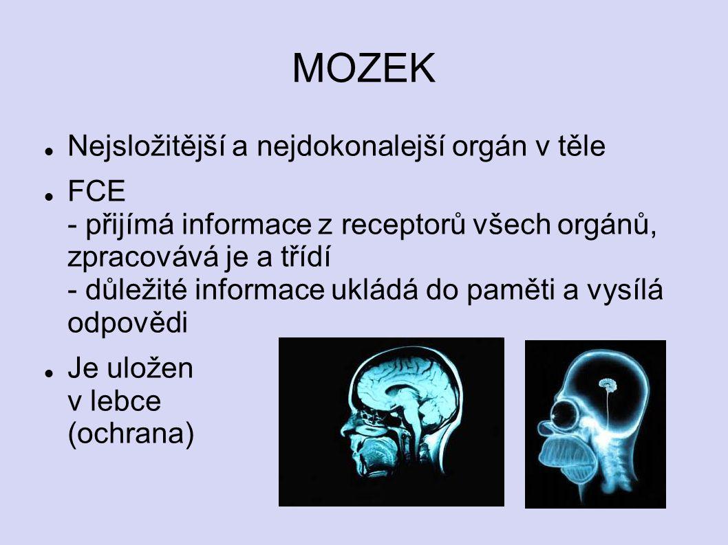 MOZEK Nejsložitější a nejdokonalejší orgán v těle FCE - přijímá informace z receptorů všech orgánů, zpracovává je a třídí - důležité informace ukládá do paměti a vysílá odpovědi Je uložen v lebce (ochrana)