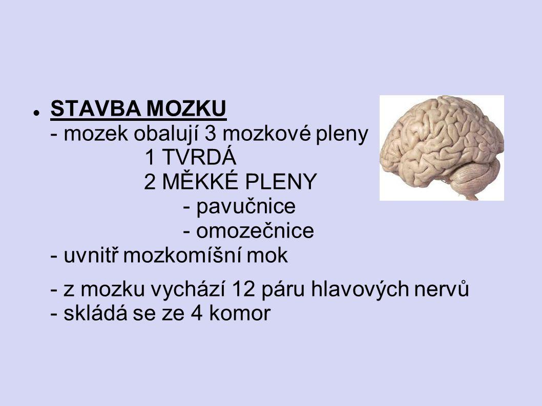 STAVBA MOZKU - mozek obalují 3 mozkové pleny 1 TVRDÁ 2 MĚKKÉ PLENY - pavučnice - omozečnice - uvnitř mozkomíšní mok - z mozku vychází 12 páru hlavovýc