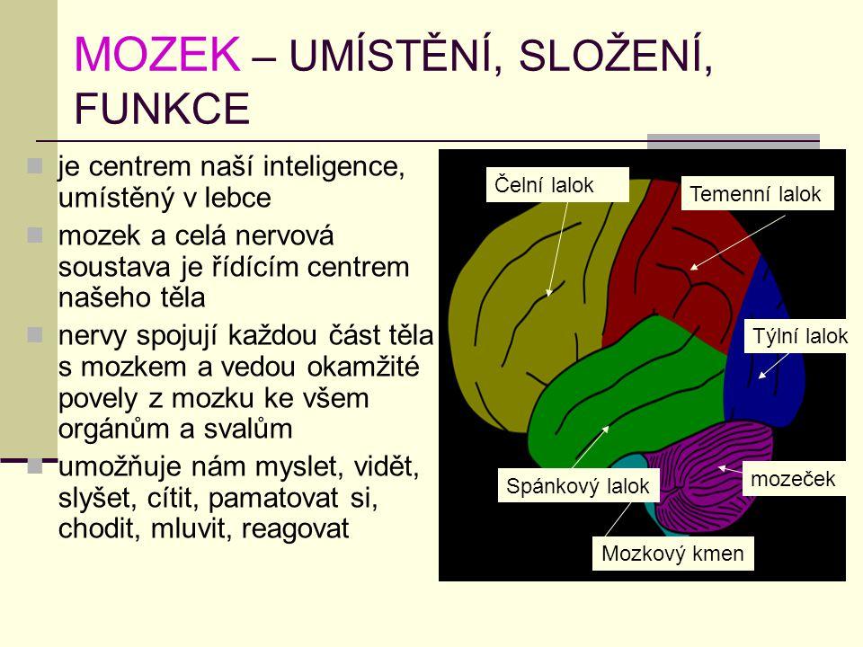 MOZEK – UMÍSTĚNÍ, SLOŽENÍ, FUNKCE je centrem naší inteligence, umístěný v lebce mozek a celá nervová soustava je řídícím centrem našeho těla nervy spo