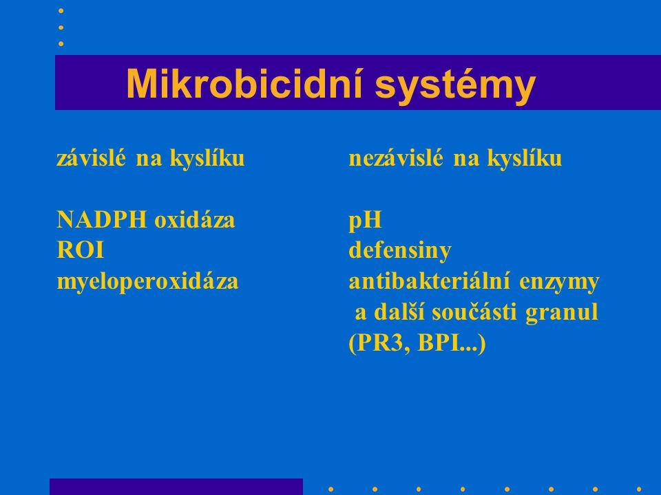 Mikrobicidní systémy závislé na kyslíku NADPH oxidáza ROI myeloperoxidáza nezávislé na kyslíku pH defensiny antibakteriální enzymy a další součásti granul (PR3, BPI...)
