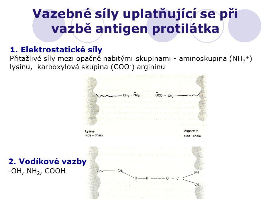 Vazebné síly uplatňující se při vazbě antigen protilátka 1. Elektrostatické síly Přitažlivé síly mezi opačně nabitými skupinami - aminoskupina (NH 3 +
