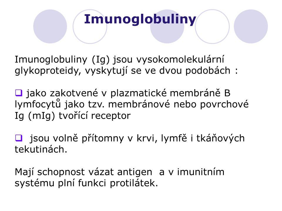 Imunoglobuliny (Ig) jsou vysokomolekulární glykoproteidy, vyskytují se ve dvou podobách :  jako zakotvené v plazmatické membráně B lymfocytů jako tzv