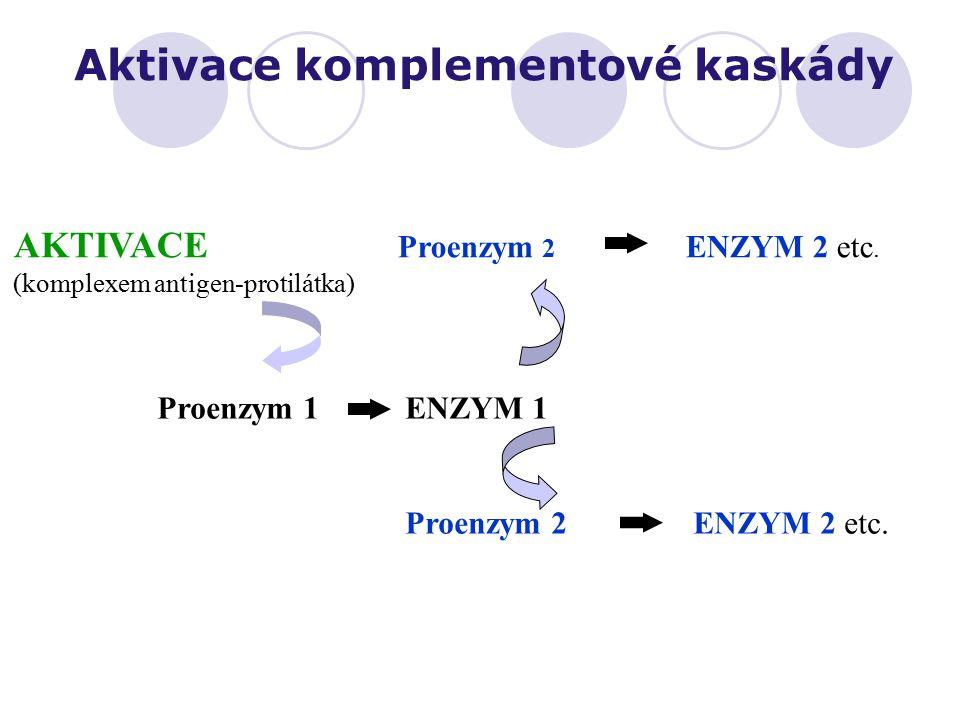 AKTIVACE Proenzym 2 ENZYM 2 etc. (komplexem antigen-protilátka) Proenzym 1 ENZYM 1 Proenzym 2 ENZYM 2 etc. Aktivace komplementové kaskády