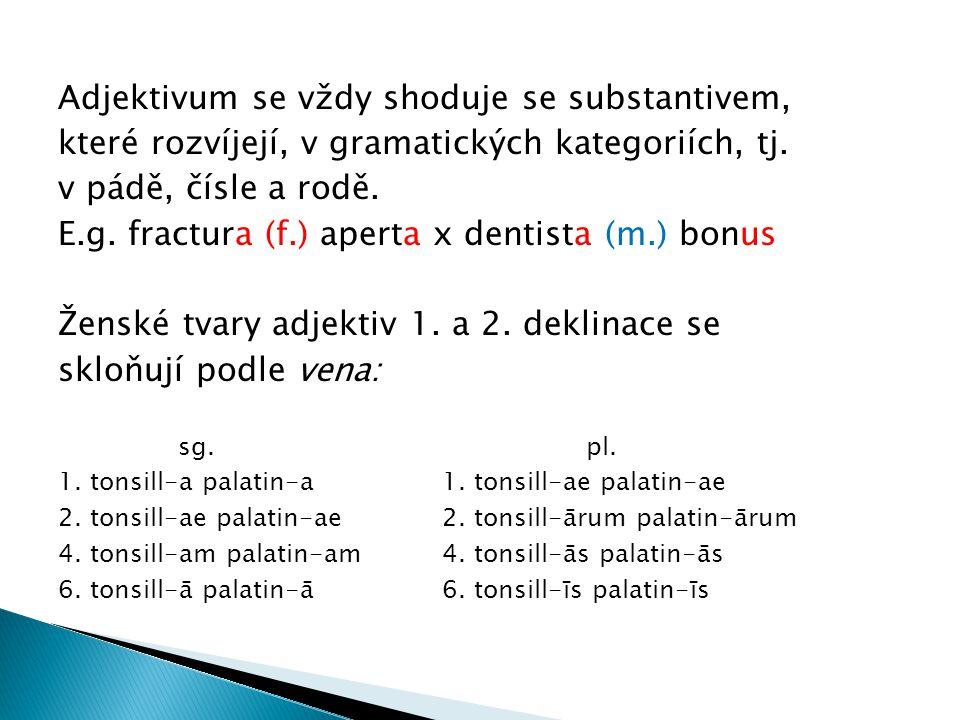 Adjektivum se vždy shoduje se substantivem, které rozvíjejí, v gramatických kategoriích, tj. v pádě, čísle a rodě. E.g. fractura (f.) aperta x dentist