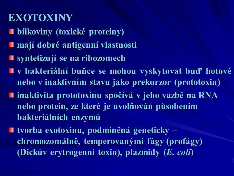 EXOTOXINY bílkoviny (toxické proteiny) mají dobré antigenní vlastnosti syntetizují se na ribozomech v bakteriální buňce se mohou vyskytovat buď hotové nebo v inaktivním stavu jako prekurzor (prototoxin) inaktivita prototoxinu spočívá v jeho vazbě na RNA nebo protein, ze které je uvolňován působením bakteriálních enzymů tvorba exotoxinu, podmíněná geneticky – chromozomálně, temperovanými fágy (profágy) (Dickův erytrogenní toxin), plazmidy (E.