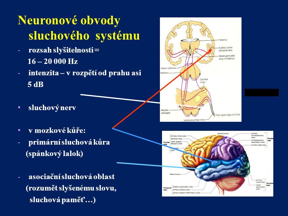 Neuronové obvody sluchového systému -rozsah slyšitelnosti = 16 – 20 000 Hz -intenzita – v rozpětí od prahu asi 5 dB sluchový nerv v mozkové kůře: -pri