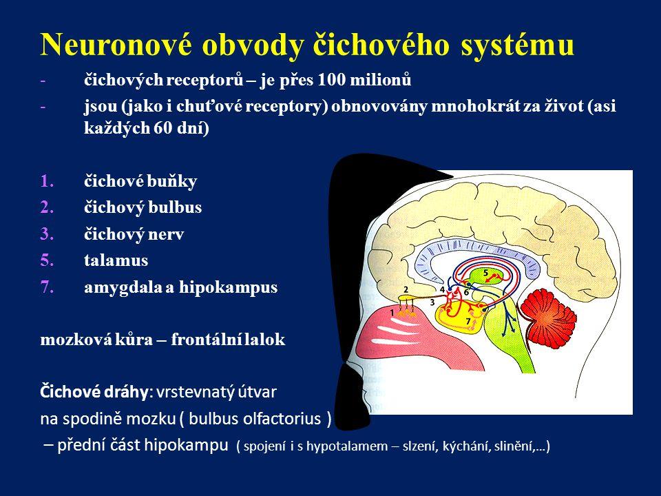 Neuronové obvody čichového systému -čichových receptorů – je přes 100 milionů -jsou (jako i chuťové receptory) obnovovány mnohokrát za život (asi každ