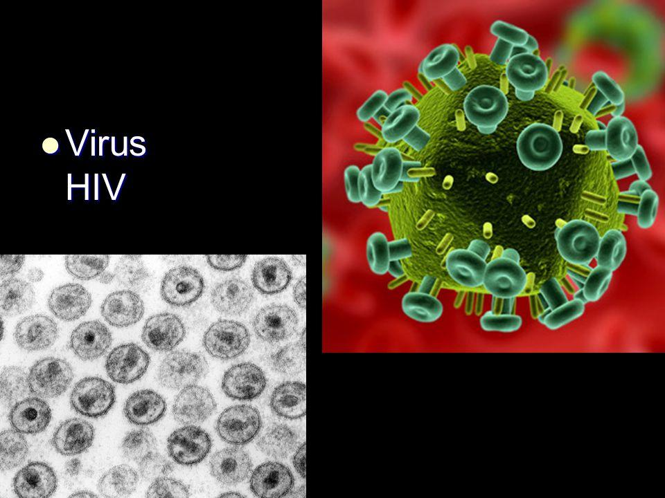 Virus HIV Virus HIV