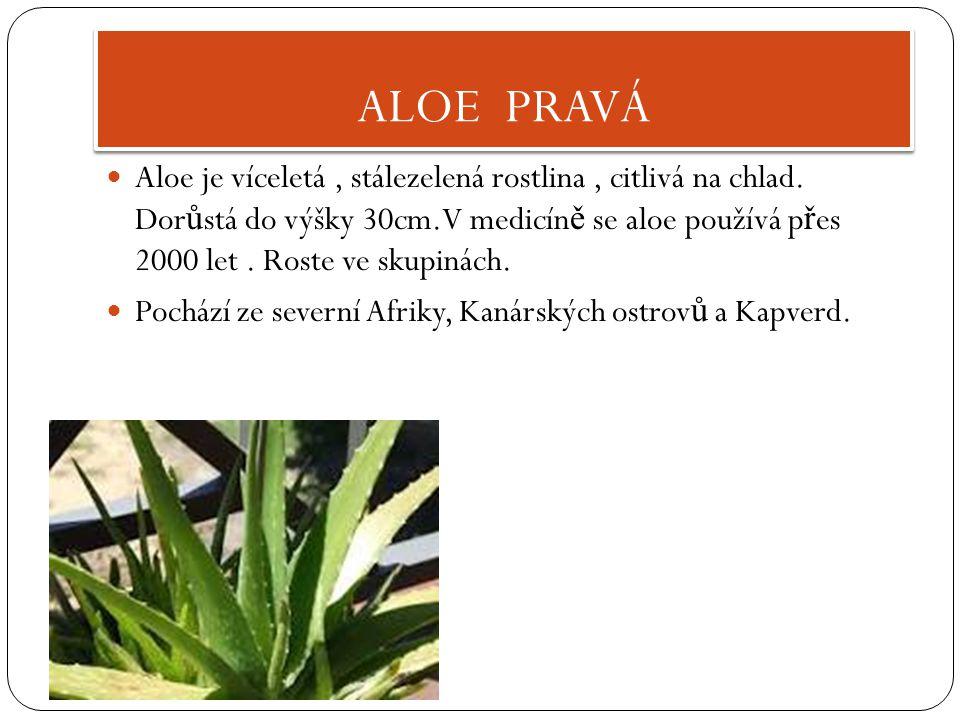 ALOE PRAVÁ Aloe je víceletá, stálezelená rostlina, citlivá na chlad.