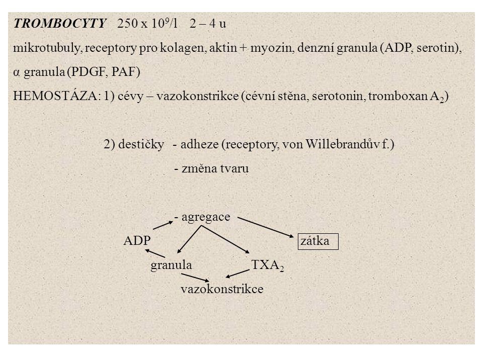 TROMBOCYTY 250 x 10 9 /l 2 – 4 u mikrotubuly, receptory pro kolagen, aktin + myozin, denzní granula (ADP, serotin), α granula (PDGF, PAF) HEMOSTÁZA: 1