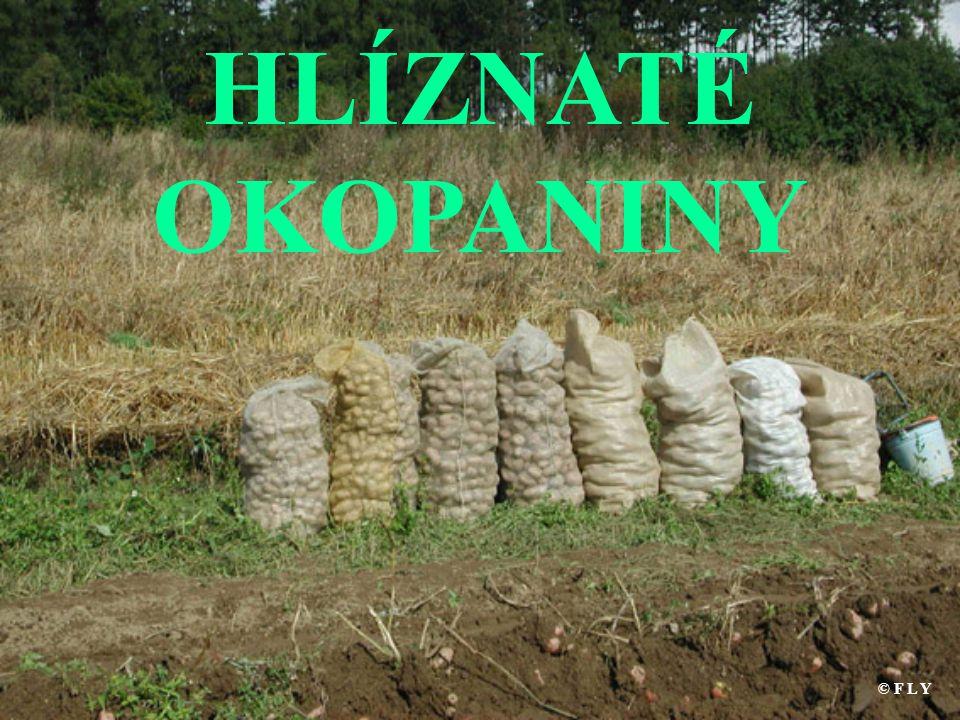 HLÍZNATÉ OKOPANINY © F L Y