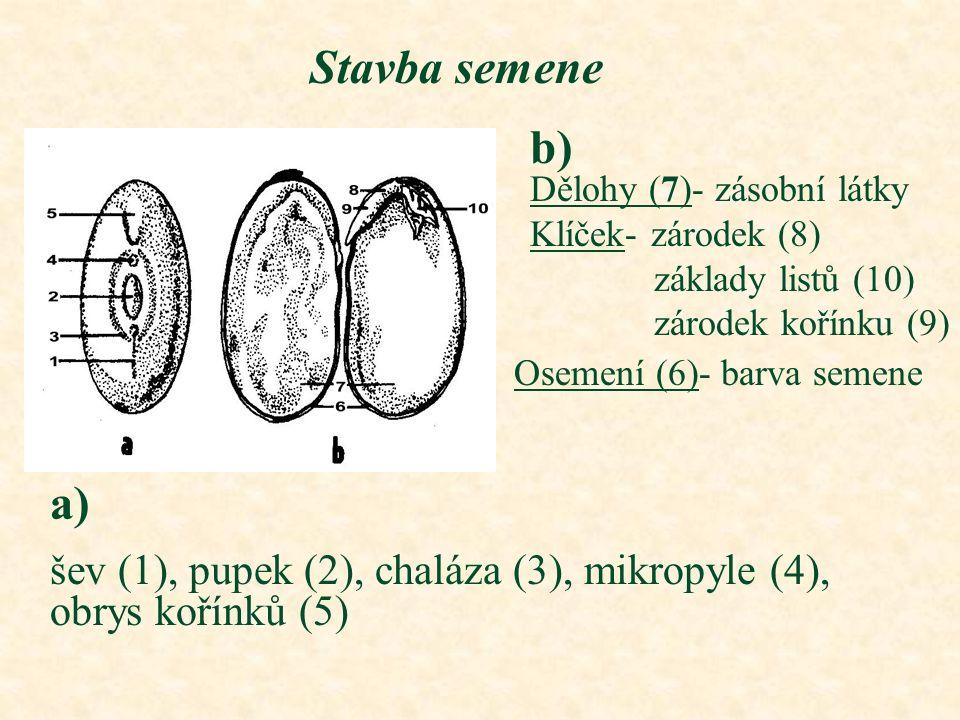 Stavba semene Dělohy (7)- zásobní látky Klíček- zárodek (8) základy listů (10) zárodek kořínku (9) Osemení (6)- barva semene b) a) šev (1), pupek (2),