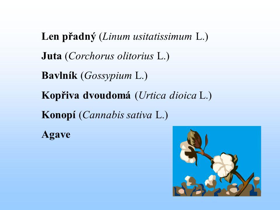 Anatomická stavba stonku lnu – příčný průřez 1 – kutikula 2 – pokožka 3 – korový parenchym (pektin A) 4 – škrobová vrstva 5 – svazky vláken (20-30 vláken, pektin B) 6 – sekundární lýková kůra (pektin A) lýková část (40 – 50 %) 7 - kambium 8 – sekundární dřevo 9 – cévy 10 - dutina dřevní část (50- 60 %)