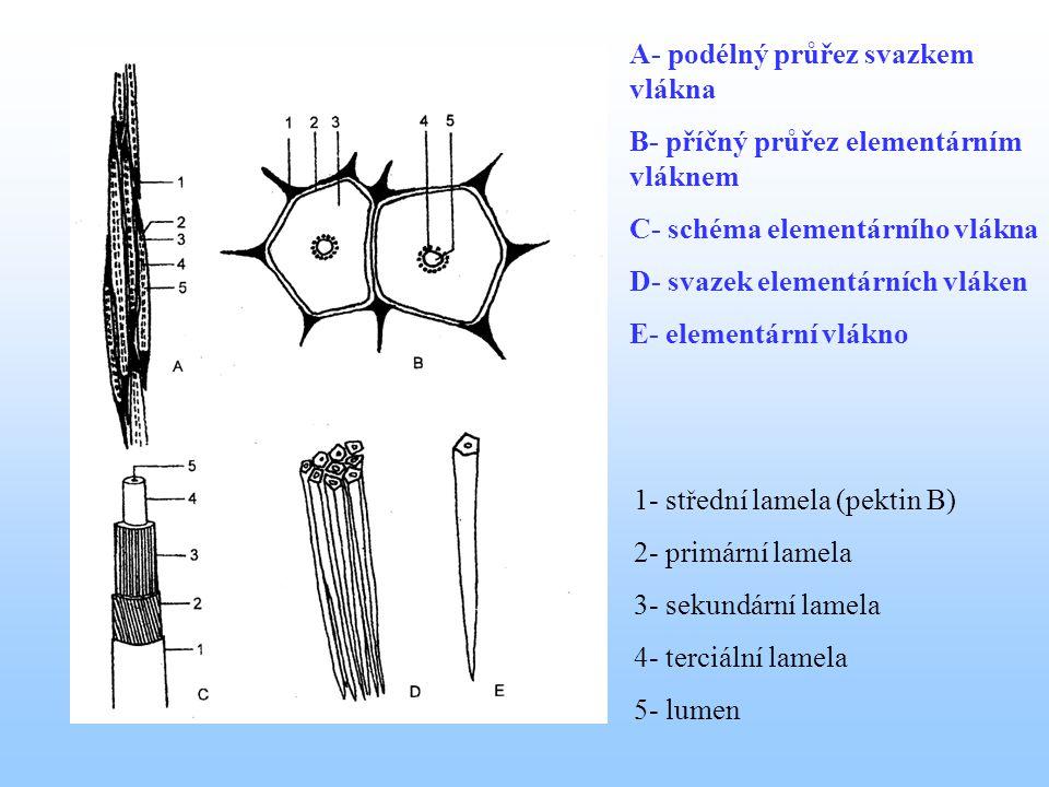 A- podélný průřez svazkem vlákna B- příčný průřez elementárním vláknem C- schéma elementárního vlákna D- svazek elementárních vláken E- elementární vlákno 1- střední lamela (pektin B) 2- primární lamela 3- sekundární lamela 4- terciální lamela 5- lumen