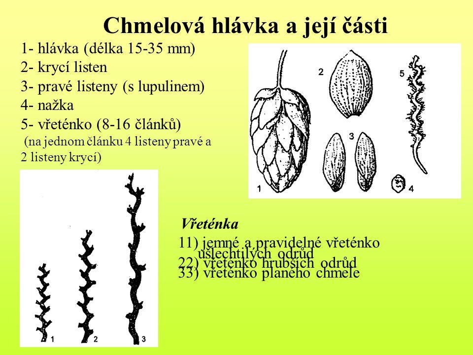 Vřeténka 11) jemné a pravidelné vřeténko ušlechtilých odrůd 22) vřeténko hrubších odrůd 33) vřeténko planého chmele 1- hlávka (délka 15-35 mm) 2- kryc