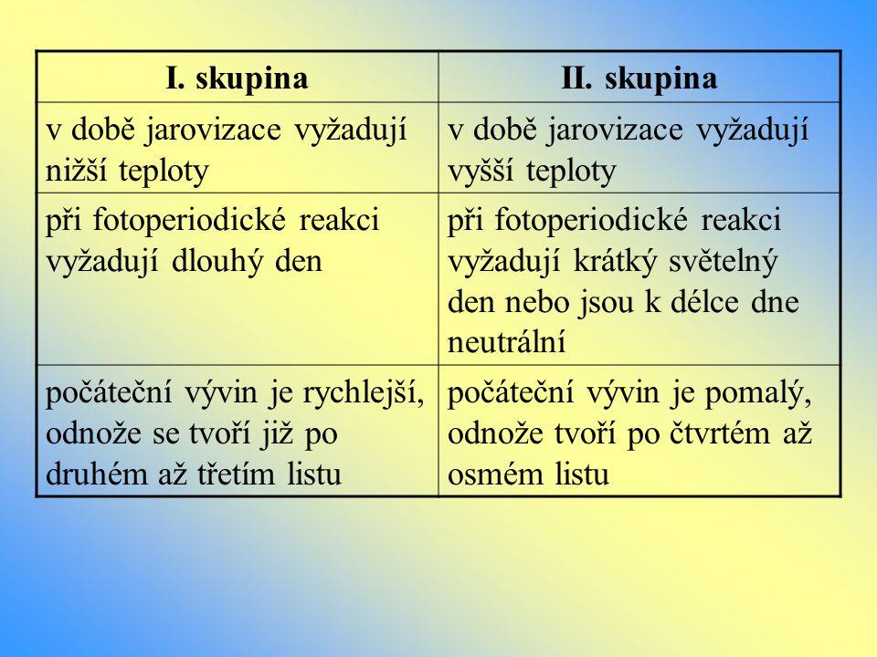 Stavba rostliny klas list internodium kolénko (nod) sekundární kořeny
