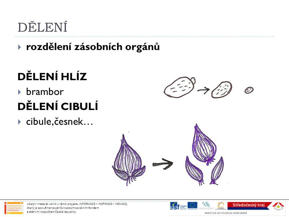 DĚLENÍ  rozdělení zásobních orgánů DĚLENÍ HLÍZ  brambor DĚLENÍ CIBULÍ  cibule,česnek… Učební materiál vznikl v rámci projektu INFORMACE – INSPIRACE – INOVACE, který je spolufinancován Evropským sociálním fondem a státním rozpočtem České republiky.