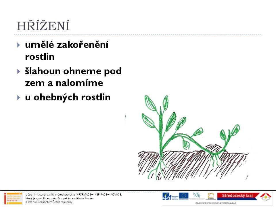 HŘÍŽENÍ  umělé zakořenění rostlin  šlahoun ohneme pod zem a nalomíme  u ohebných rostlin Učební materiál vznikl v rámci projektu INFORMACE – INSPIRACE – INOVACE, který je spolufinancován Evropským sociálním fondem a státním rozpočtem České republiky.