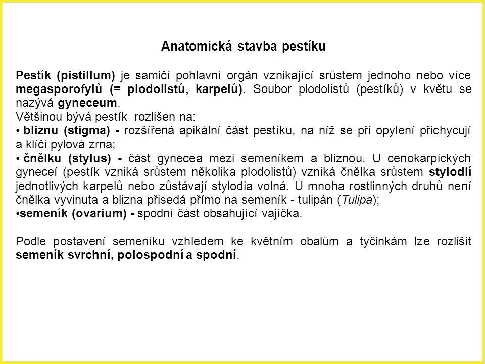Anatomická stavba pestíku Pestík (pistillum) je samičí pohlavní orgán vznikající srůstem jednoho nebo více megasporofylů (= plodolistů, karpelů). Soub