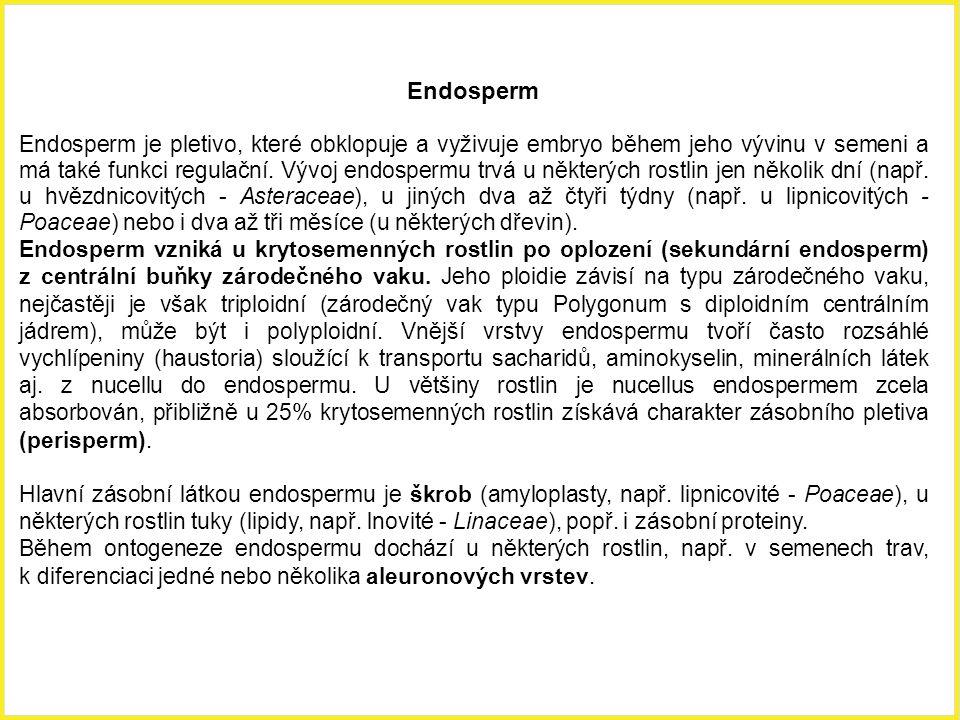 Endosperm Endosperm je pletivo, které obklopuje a vyživuje embryo během jeho vývinu v semeni a má také funkci regulační. Vývoj endospermu trvá u někte