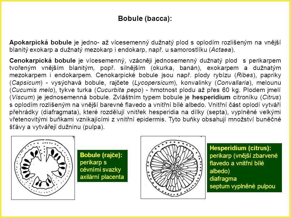 Bobule (bacca): Apokarpická bobule je jedno- až vícesemenný dužnatý plod s oplodím rozlišeným na vnější blanitý exokarp a dužnatý mezokarp i endokarp,