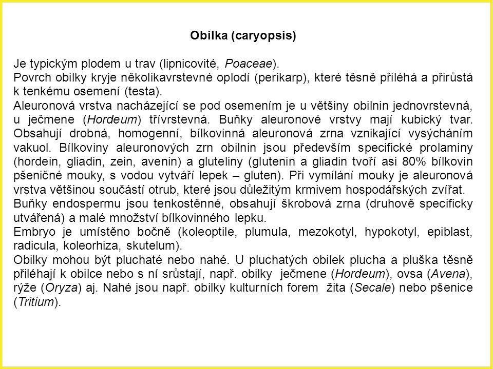 Obilka (caryopsis) Je typickým plodem u trav (lipnicovité, Poaceae). Povrch obilky kryje několikavrstevné oplodí (perikarp), které těsně přiléhá a při