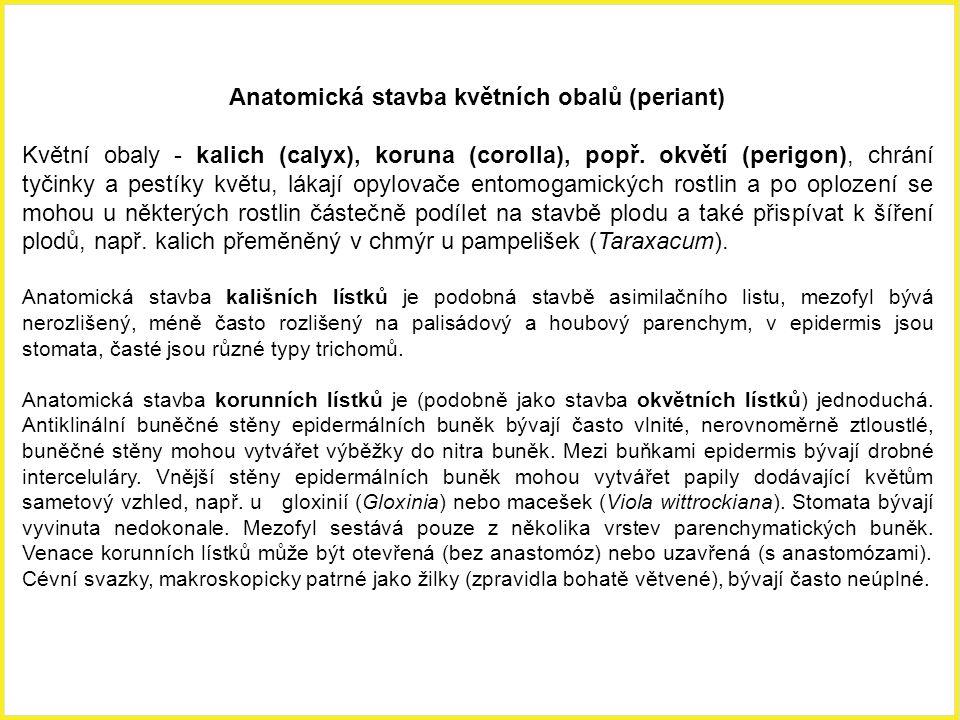Trimerická lokulicidní (pouzdrosečná) tobolka s axilární (= nákoutní) placentací ladoňky sibiřské (Scilla siberica).