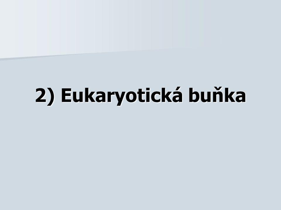 2) Eukaryotická buňka