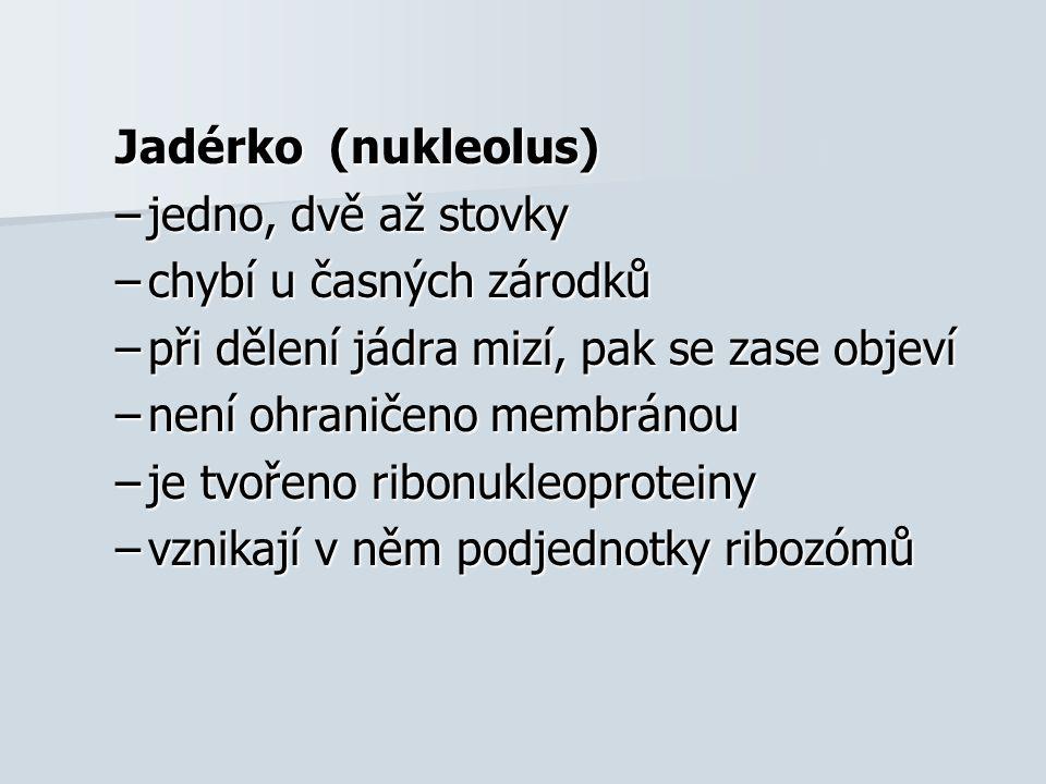 Jadérko (nukleolus) –jedno, dvě až stovky –chybí u časných zárodků –při dělení jádra mizí, pak se zase objeví –není ohraničeno membránou –je tvořeno ribonukleoproteiny –vznikají v něm podjednotky ribozómů