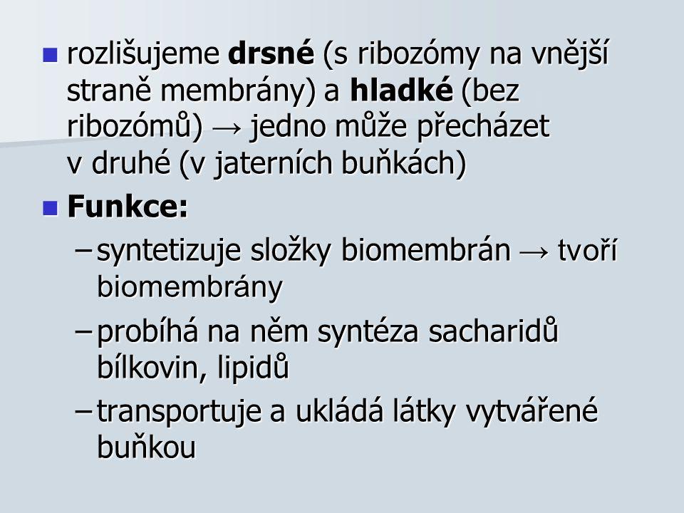 rozlišujeme drsné (s ribozómy na vnější straně membrány) a hladké (bez ribozómů) → jedno může přecházet v druhé (v jaterních buňkách) rozlišujeme drsné (s ribozómy na vnější straně membrány) a hladké (bez ribozómů) → jedno může přecházet v druhé (v jaterních buňkách) Funkce: Funkce: –syntetizuje složky biomembrán → tvoří biomembrány –probíhá na něm syntéza sacharidů bílkovin, lipidů –transportuje a ukládá látky vytvářené buňkou