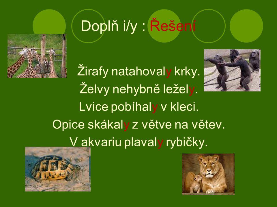 Doplň i/y : Řešení Žirafy natahovaly krky. Želvy nehybně ležely. Lvice pobíhaly v kleci. Opice skákaly z větve na větev. V akvariu plavaly rybičky.