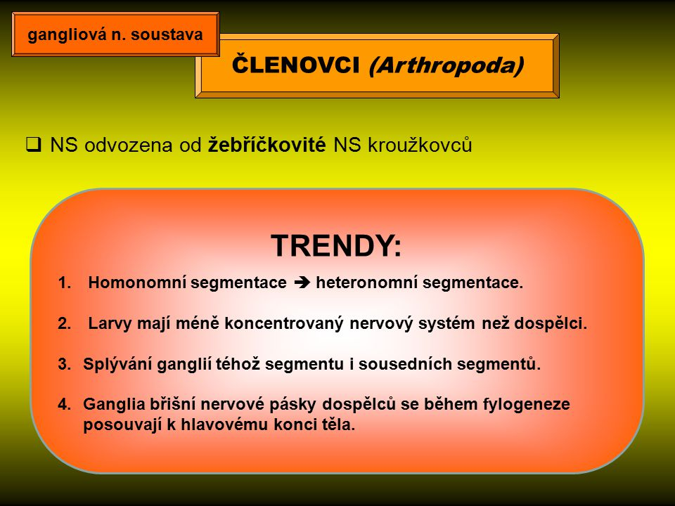 ČLENOVCI (Arthropoda)  NS odvozena od žebříčkovité NS kroužkovců TRENDY: 1. Homonomní segmentace  heteronomní segmentace. 2. Larvy mají méně koncent