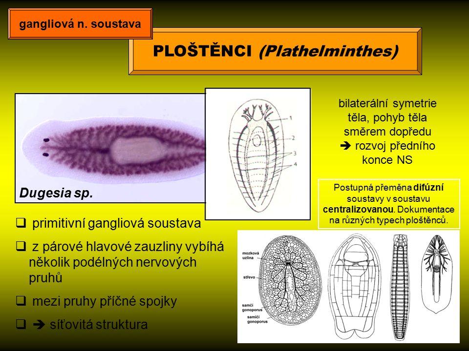 MĚKKÝŠI (Mollusca) gangliová n.