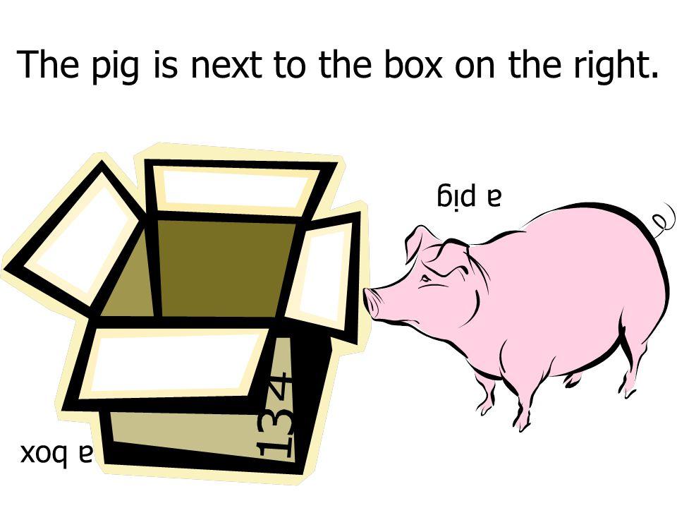 The pig is next to the box on the right. a box a pig