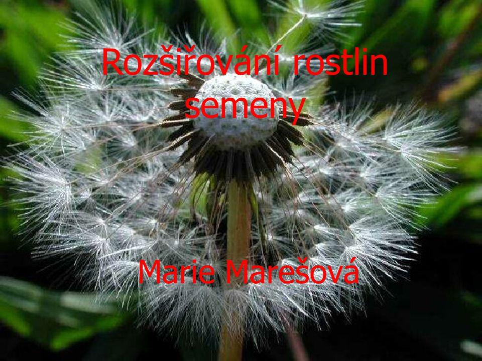 Rozšiřování rostlin semeny Marie Marešová