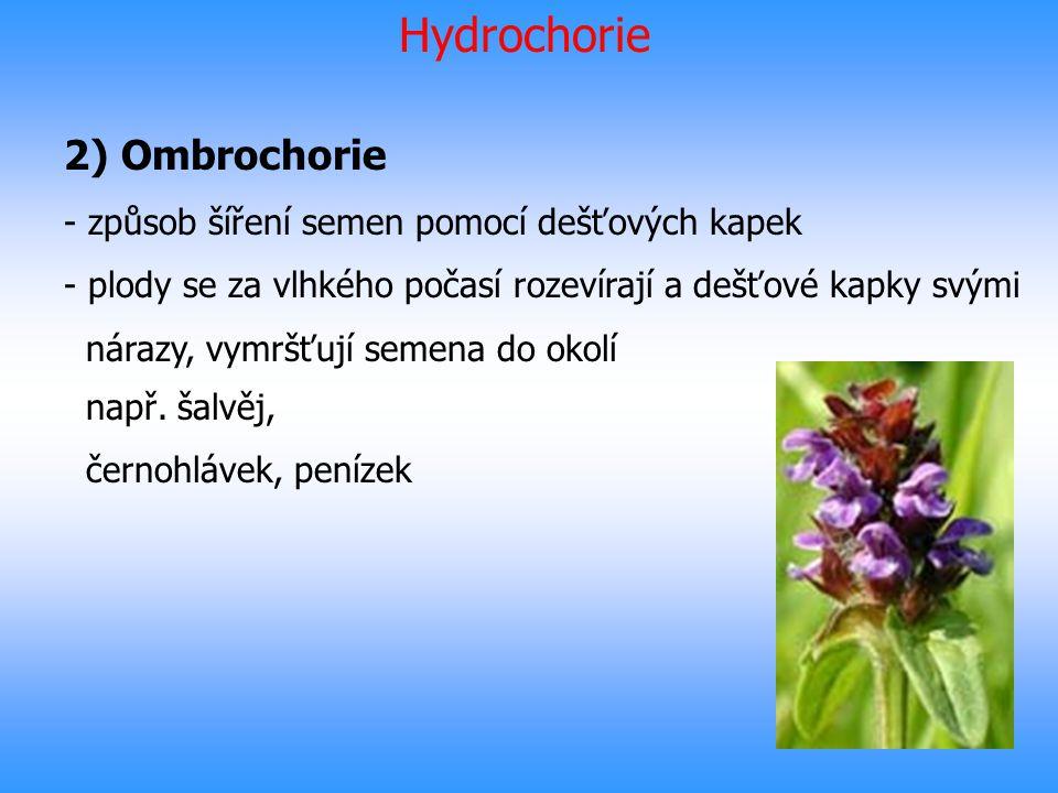 Hydrochorie 2) Ombrochorie - způsob šíření semen pomocí dešťových kapek - plody se za vlhkého počasí rozevírají a dešťové kapky svými nárazy, vymršťuj
