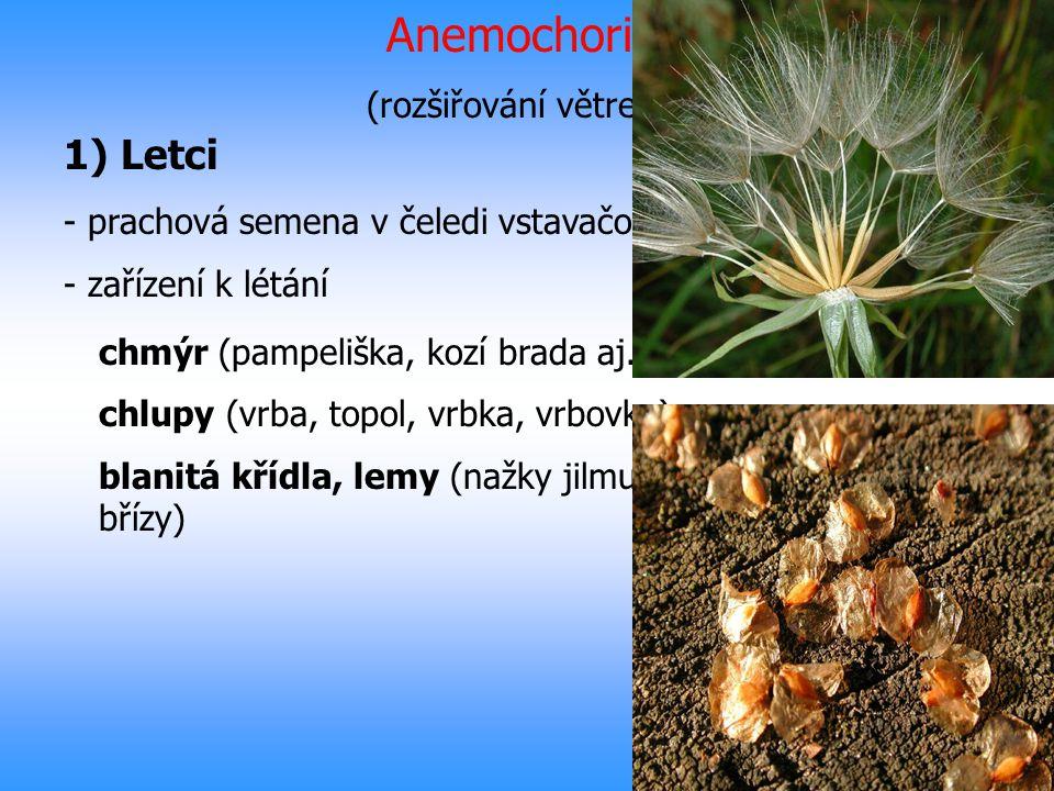 Anemochorie (rozšiřování větrem) 1) Letci - prachová semena v čeledi vstavačovitých - zařízení k létání chmýr (pampeliška, kozí brada aj.) chlupy (vrb